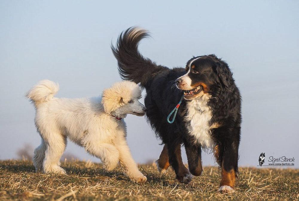 Hunde und die Leinenpflicht in Erfurt