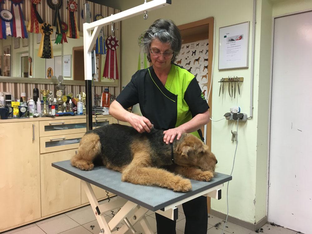 Bei Hundefriseurin Sabine Schlesinger in Erfurt fühlen sich große und kleine Hunde wohl